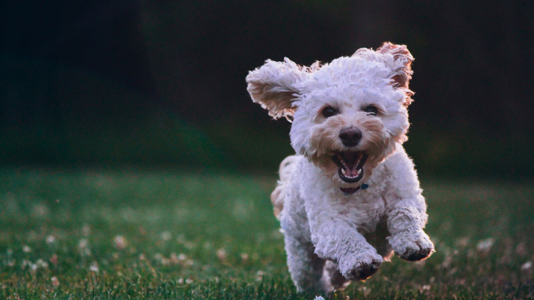 Improving Your Dog's Health and Wellness