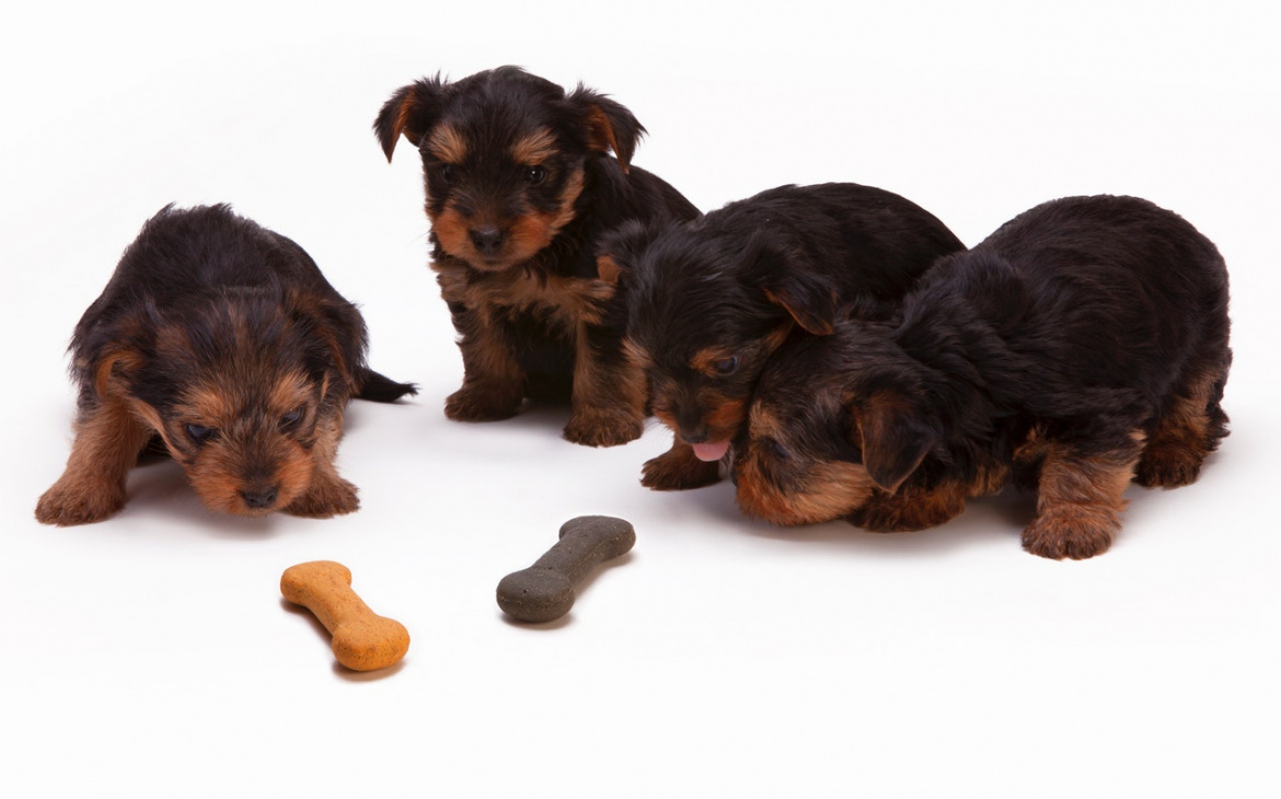 How to Determine If Your Dog Needs to Make a Dietary Change