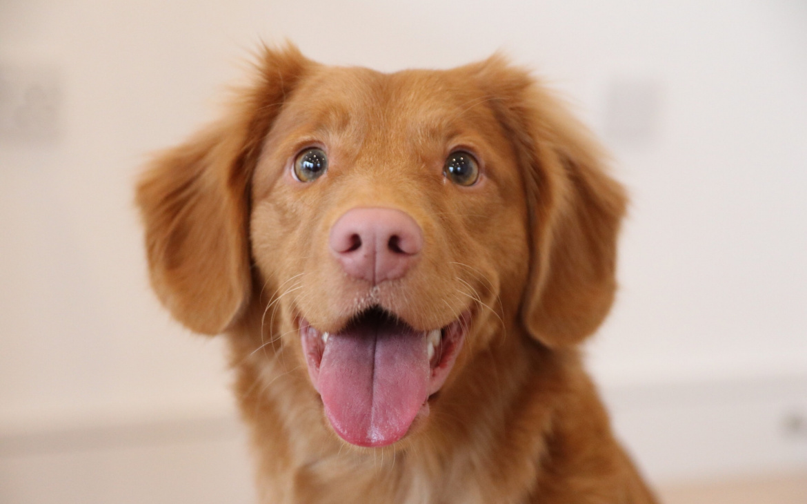 Grooming Tips: Maintenance You Can Actually do for Your Dog at Home