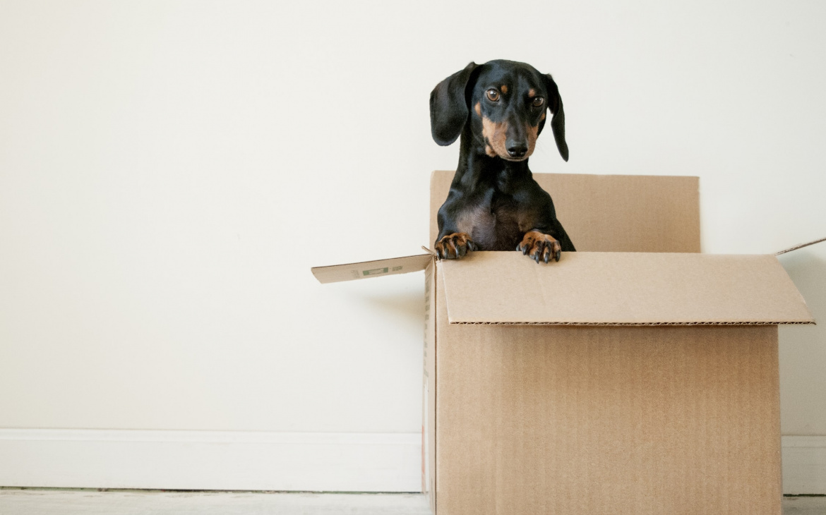 Moving? Make sure your pup is prepared with these top tips